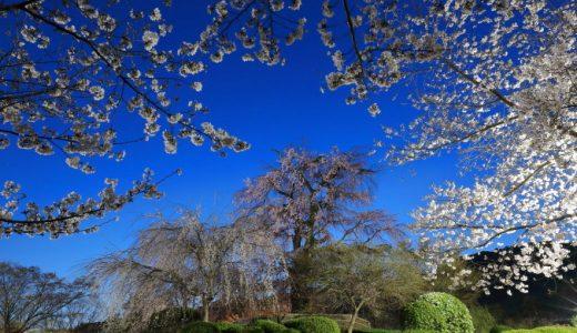 春 満開!